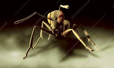 Ant, computer artwork
