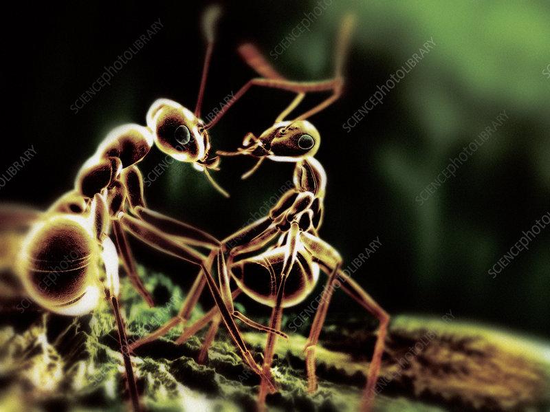 Ants interacting, computer artwork