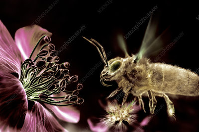 Bee and flower, computer artwork