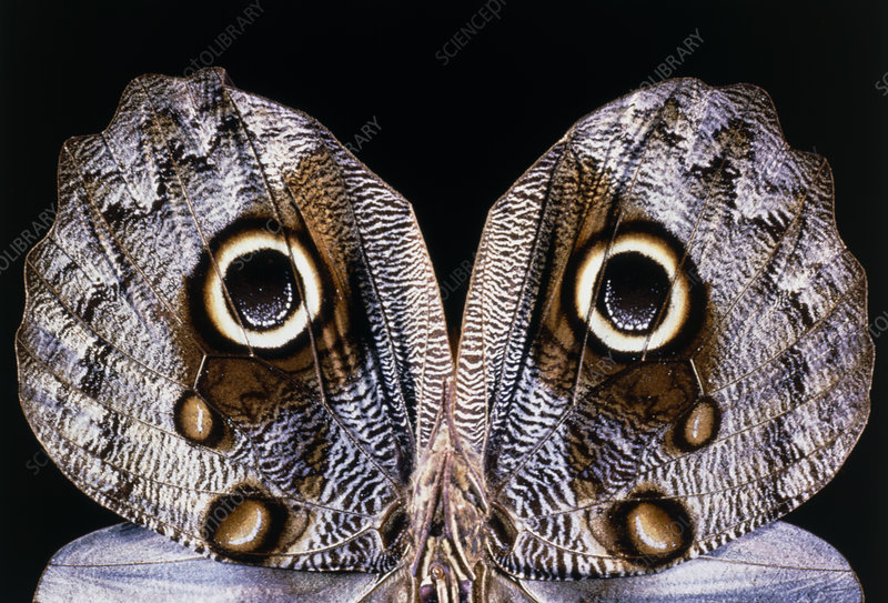 1000  images about moths on Pinterest
