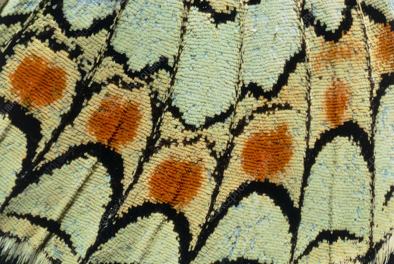 Close-up of a butterfly wing