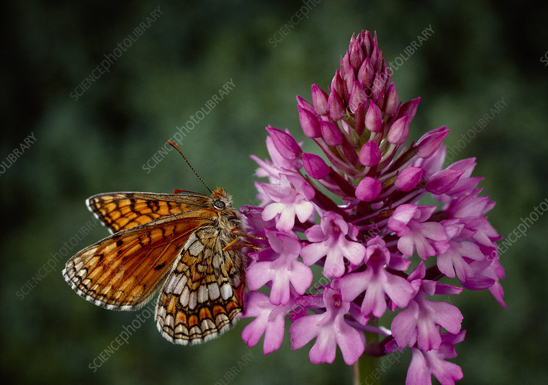 Macrophotograph of butterfly on flower