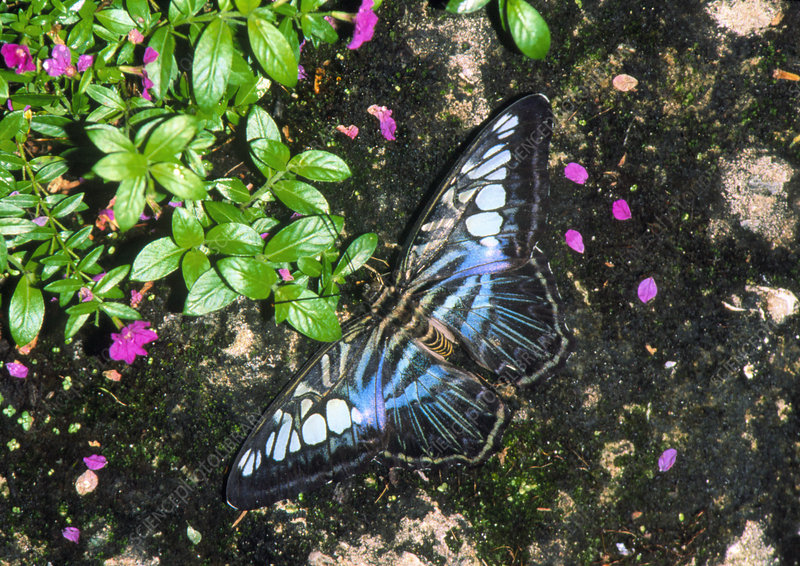 View of a butterfly resting on a rock