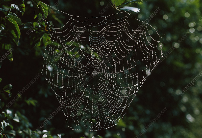 A spider's web strung with water droplets