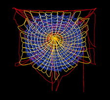 Spider web construction
