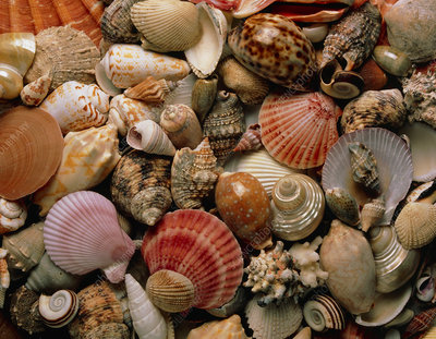 Collection of sea shells