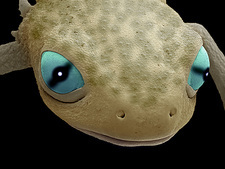 Head of a young newt, SEM
