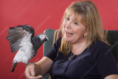 Timneh African Grey Parrot with Owner