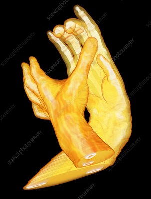 ... 3d animasi monkey wave hand animated gifs funny pictures funny