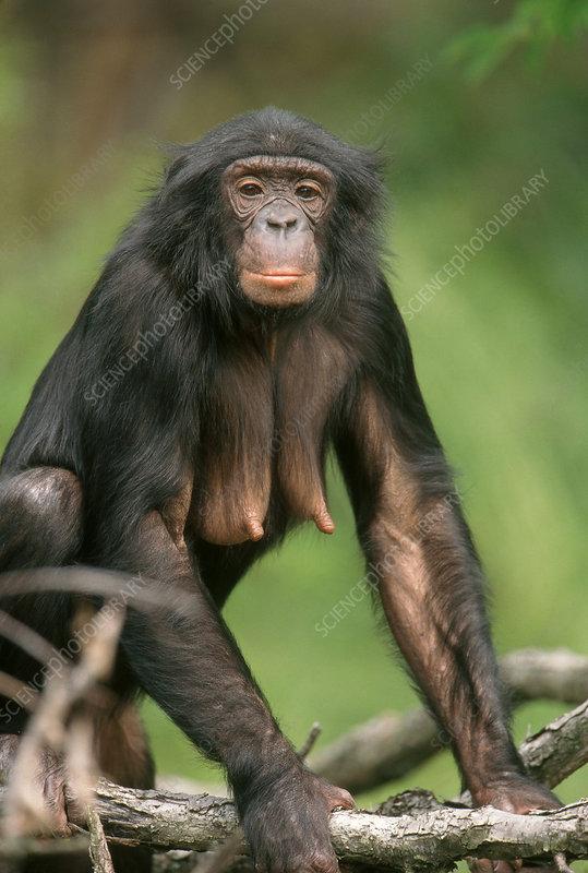 Bonobo nothing like a good book