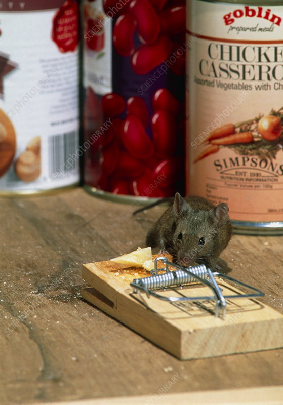 Mouse with mousetrap