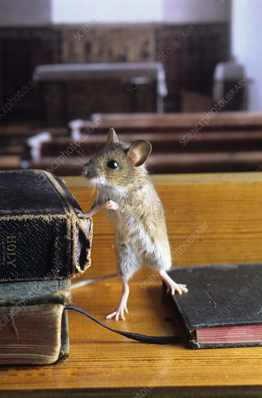 Mouse in a church