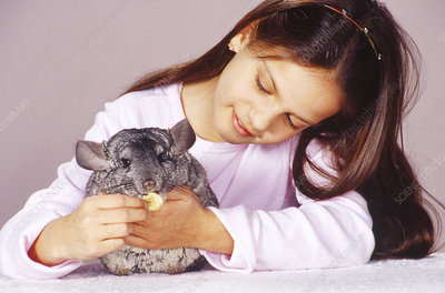 Girl with chinchilla