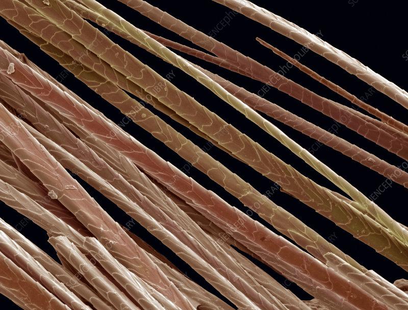 Chinchilla hair