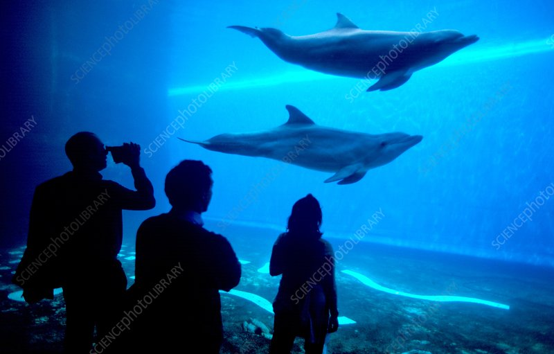 Dolphins in aquarium