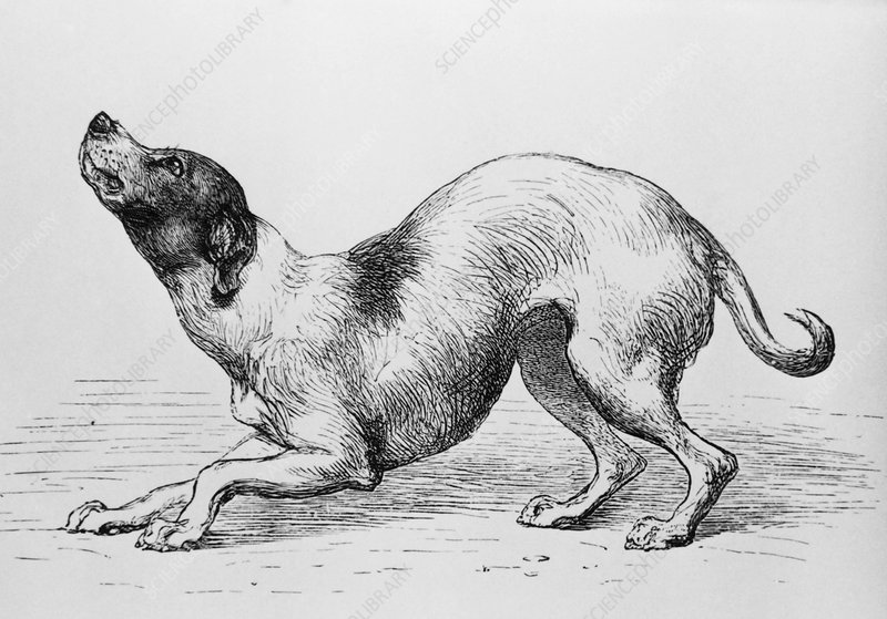 Engraving of a humble or affectionate dog