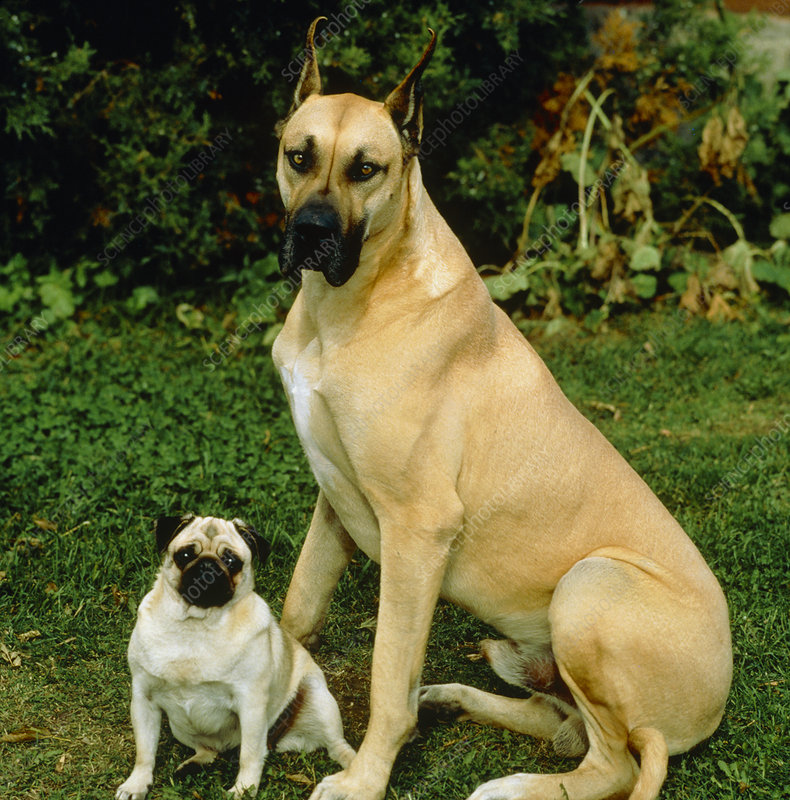 Large and small dogs