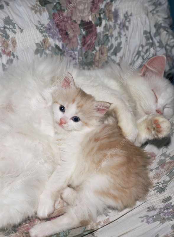 Domestic cat and kitten