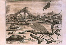 Engraving of a dragon and insects from Brazil